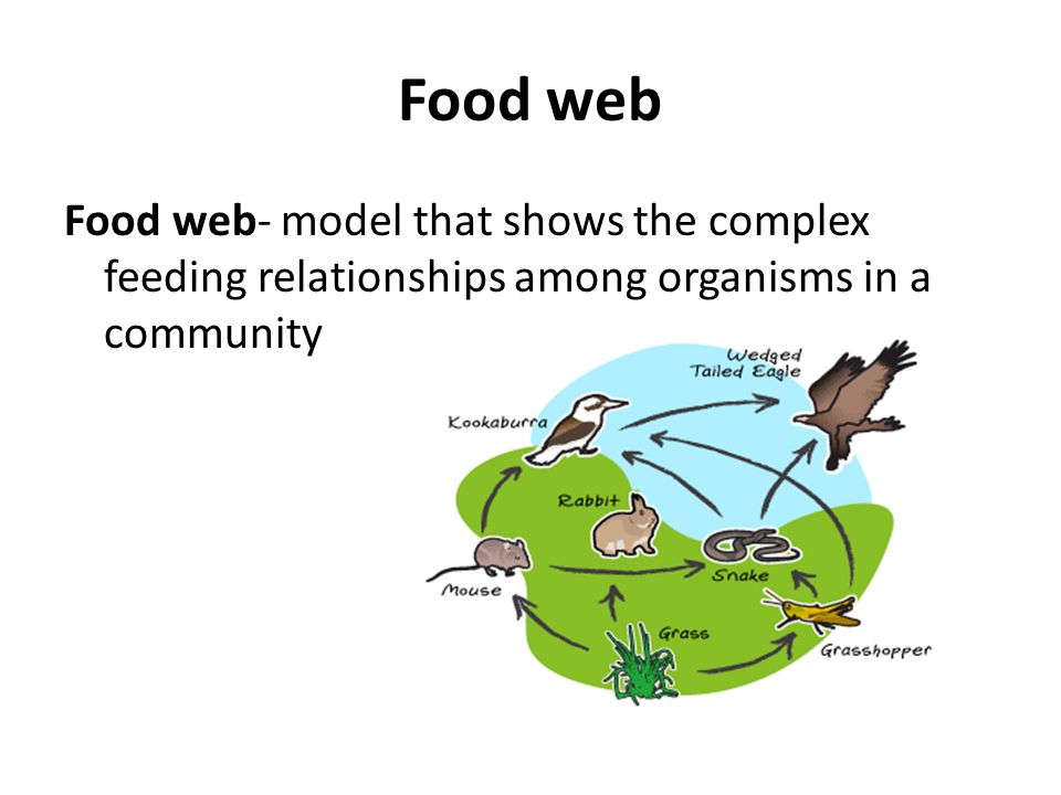 different ecological relationship among organisms for kids