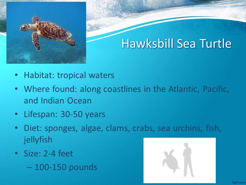 Hawksbill Sea Turtle Diagram Digitalspacefo