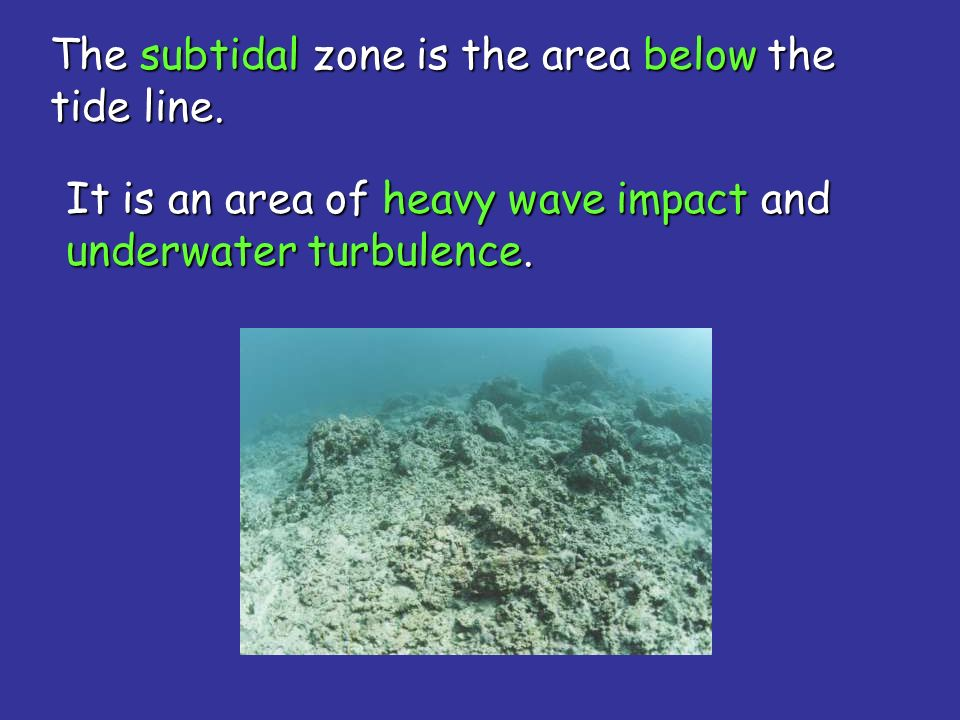 The subtidal zone is the area below the tide line.