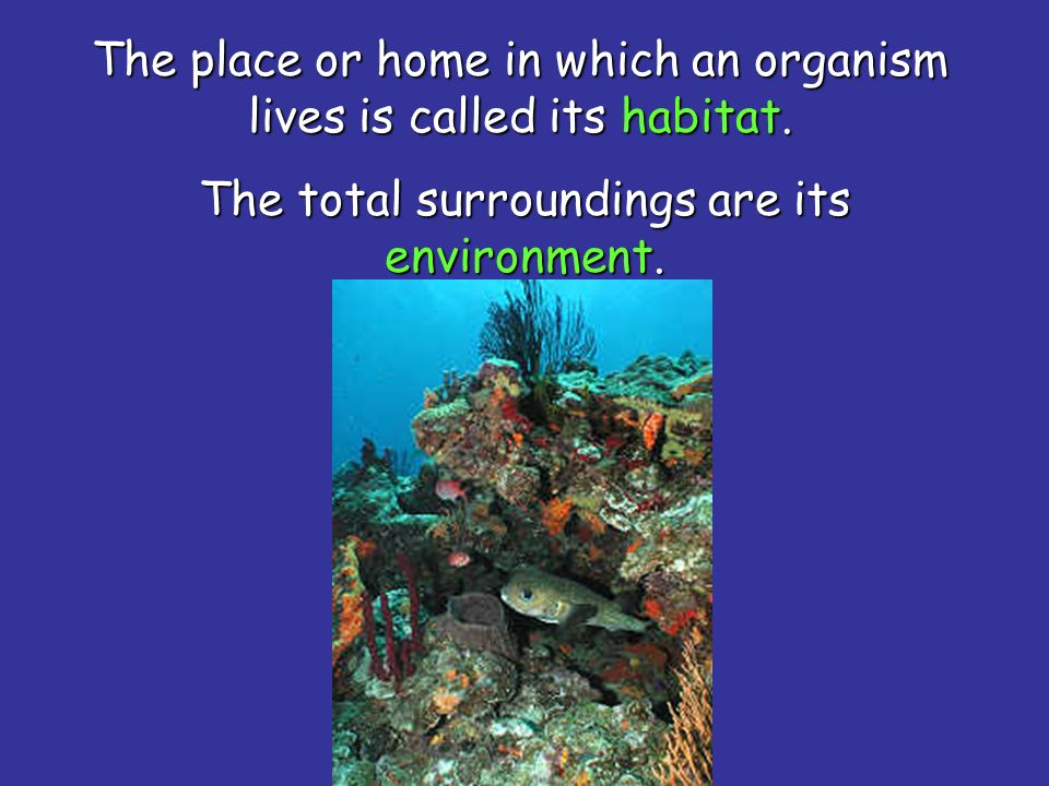 The place or home in which an organism lives is called its habitat.