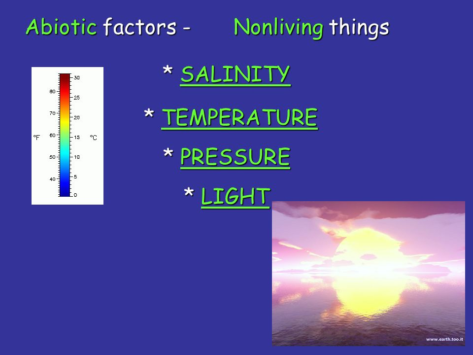 Abiotic factors - Nonliving things * SALINITY * TEMPERATURE * PRESSURE * LIGHT