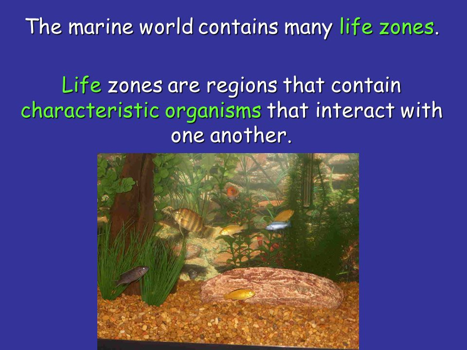 The marine world contains many life zones.