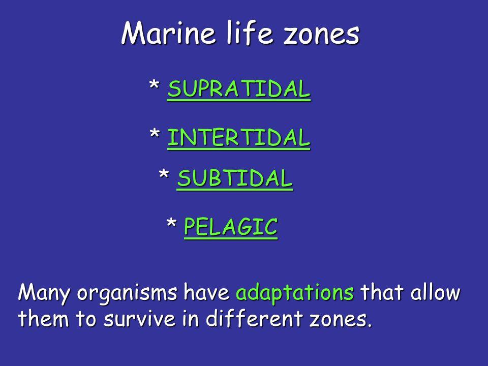 Marine life zones * SUPRATIDAL * INTERTIDAL * SUBTIDAL * PELAGIC