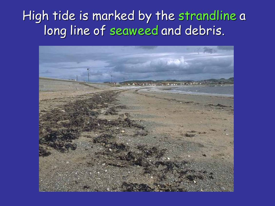High tide is marked by the strandline a long line of seaweed and debris.