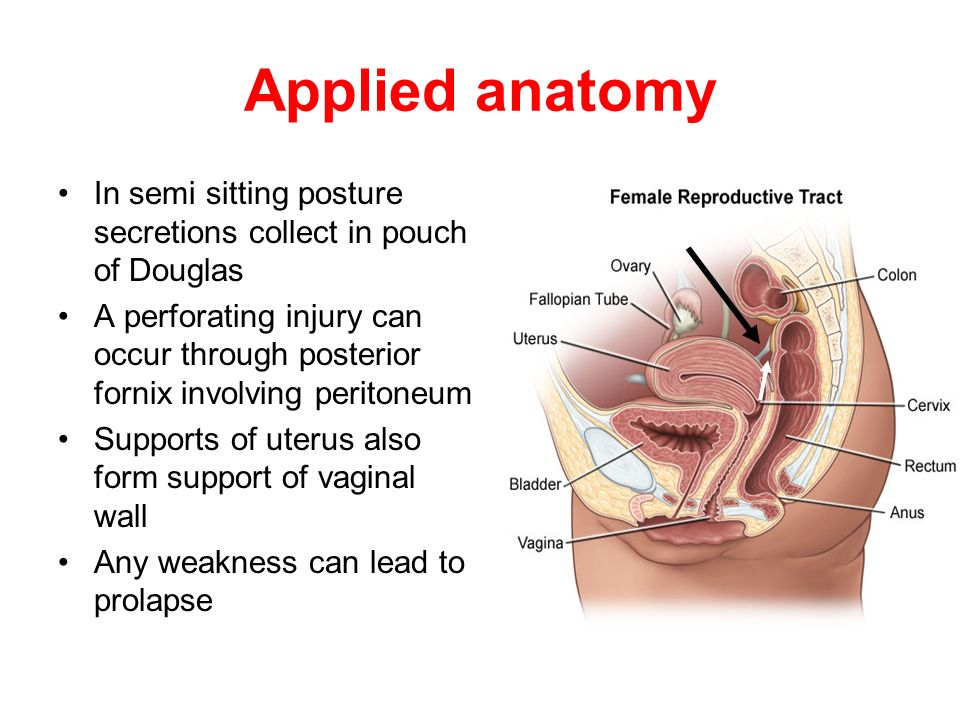 Uterus gross anatomy