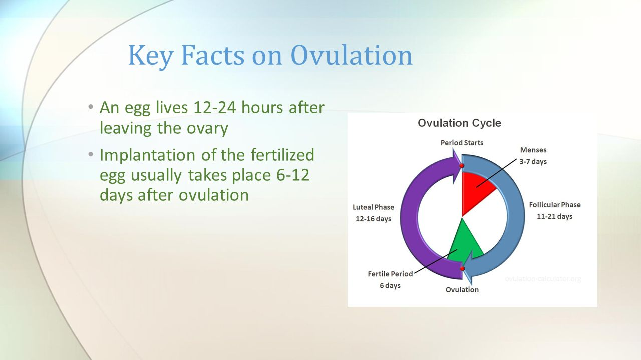 Reproductive review how many mature eggs are released from the key facts on ovulation an egg lives 12 24 hours after leaving the ovary pooptronica