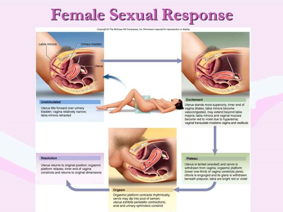 Best Stimuli For Vaginal Orgasm