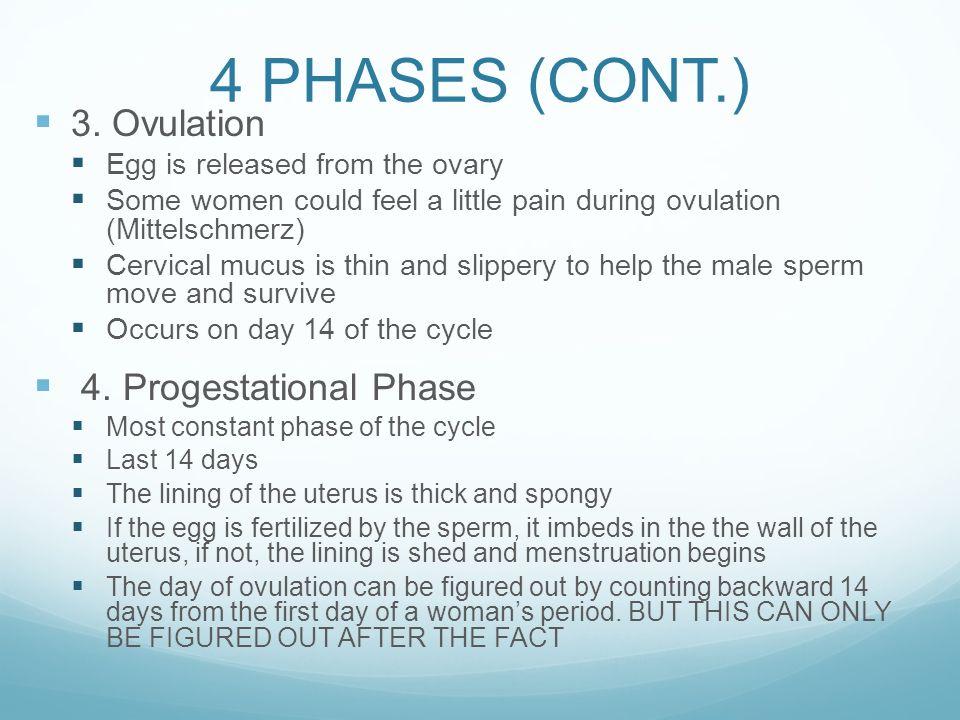 The Menstrual Cycle Kids Health Menstruation Movie Ppt