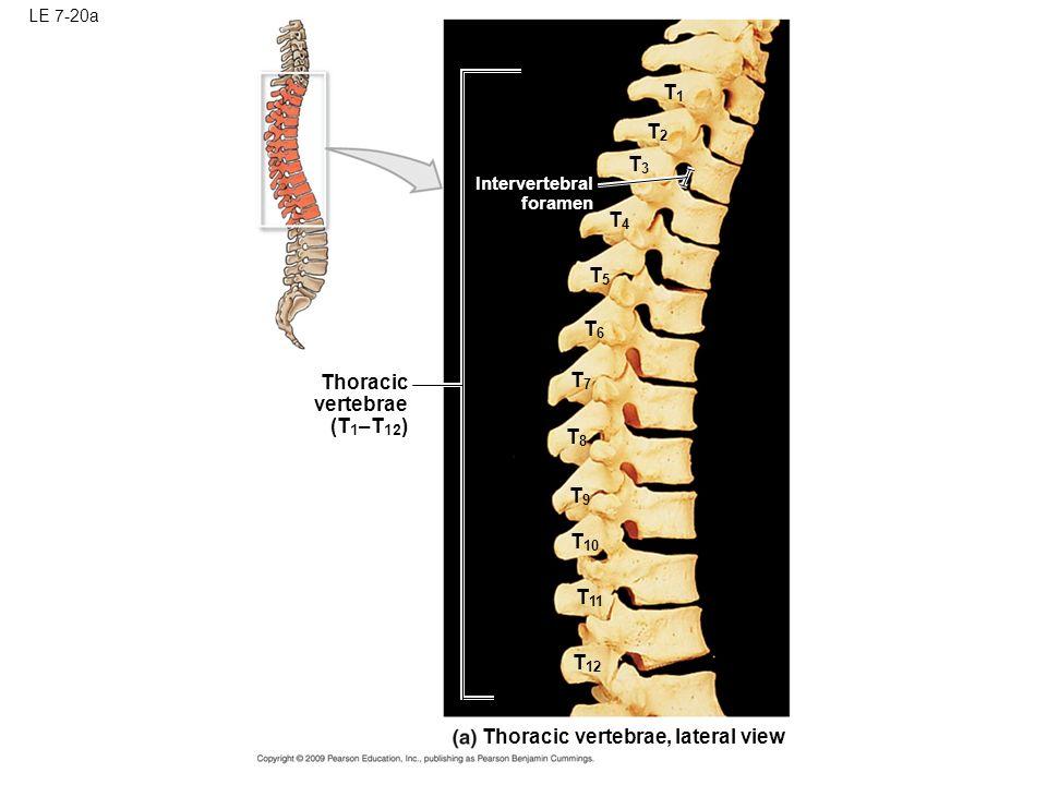 Similiar T8 Spine Keywords