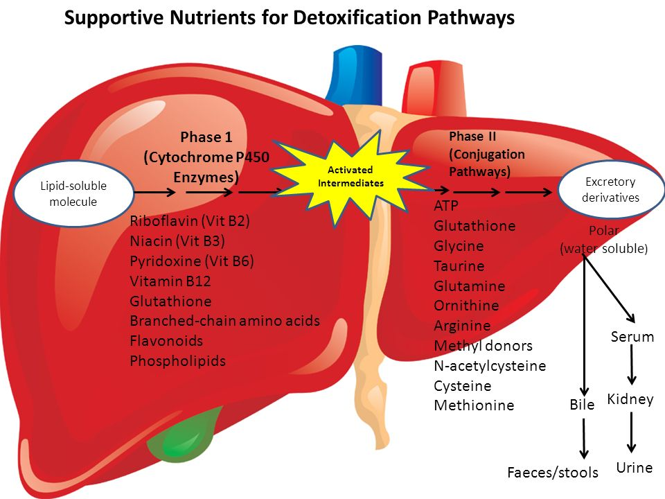 Holistic detoxification of the liver ppt video online download supportive nutrients for detoxification pathways ccuart Gallery