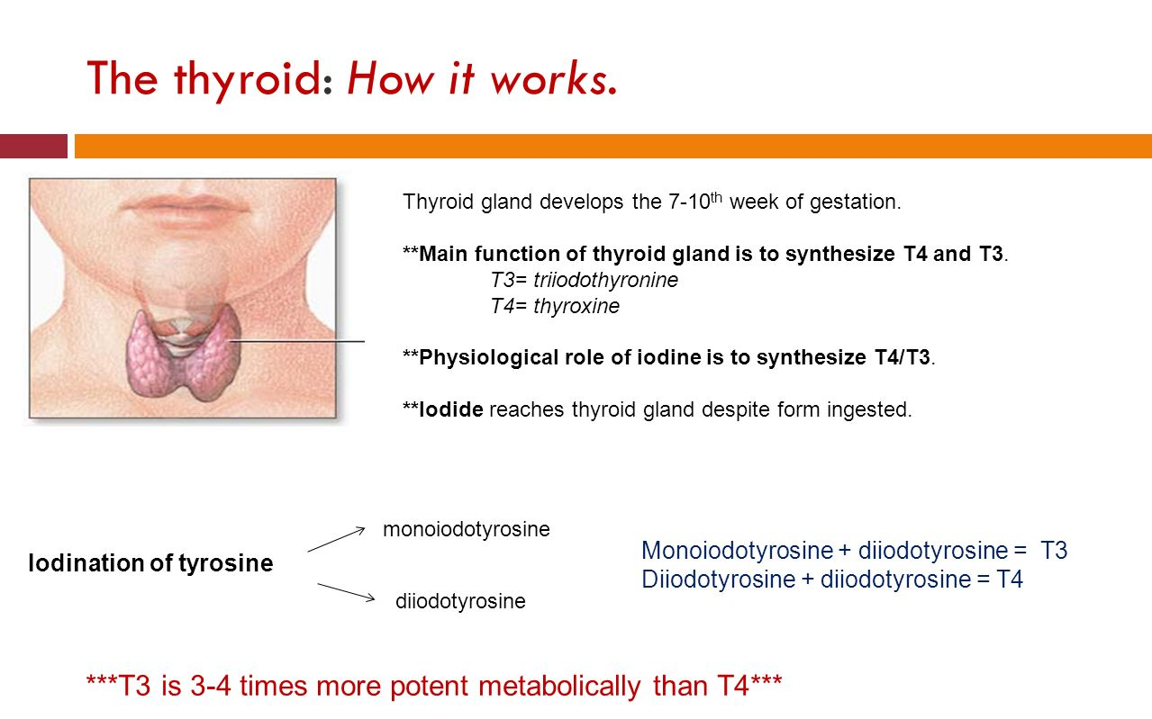 iodine and thyroid gland Thyroid cancers are treated by removing the whole or part of thyroid gland radioactive iodine 131 may be given to radioablate the thyroid thyroxine is given to.