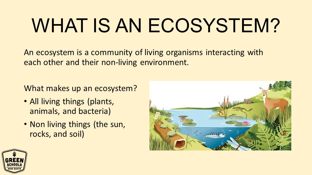 Healthy Ecosystems Amp Energy Ppt Download
