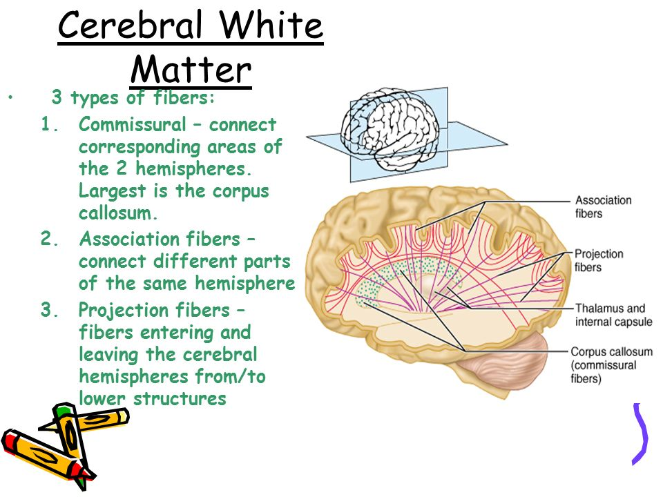 Chapter 8 Nervous System  Ppt Video Online Download. What Is Survey Monkey Template. Research Poster Templates. Resumes For Older Workers Template. Billing Statement Template. Save The Date Templates For Word Template. Tips On Acing An Interview Template. Restaurants Business Plan Sample Template. Sample Of X Ray Kub Report Format