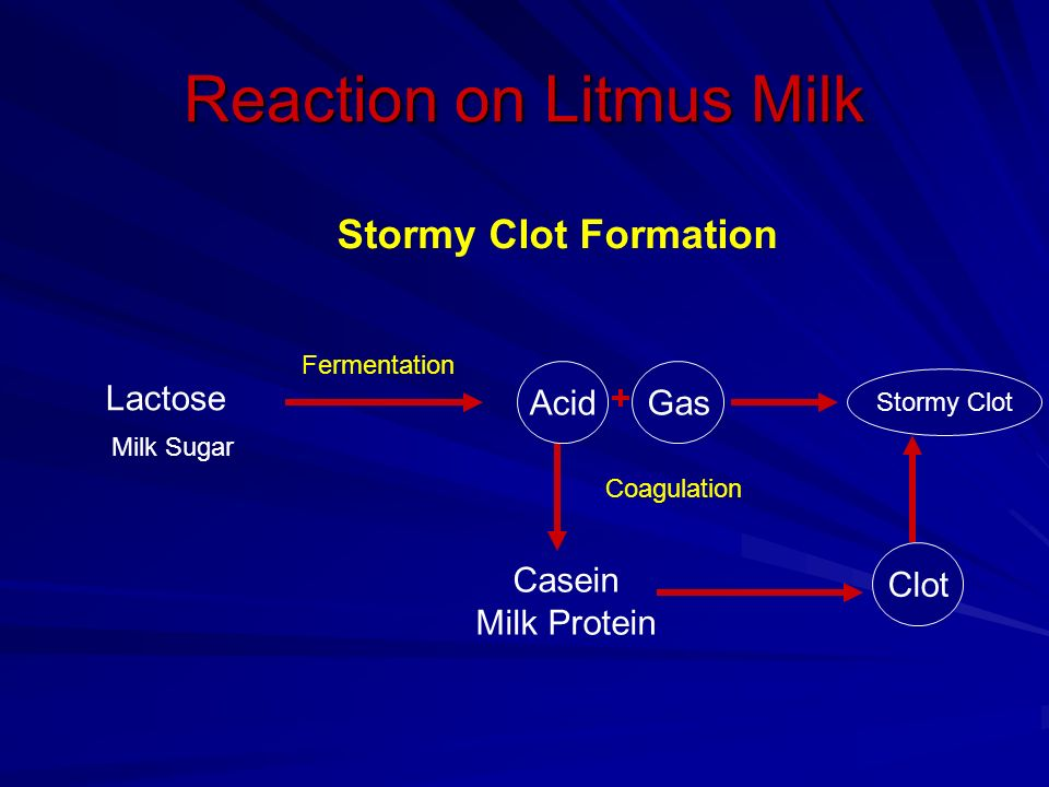 litmus milk procedural Litmus milk is a complex medium that can potentially distinguish many species of bacteria litmus milk has several components that can be metabolized: lactose (milk sugar) casein (milk protein) and litmus (a ph indicator.