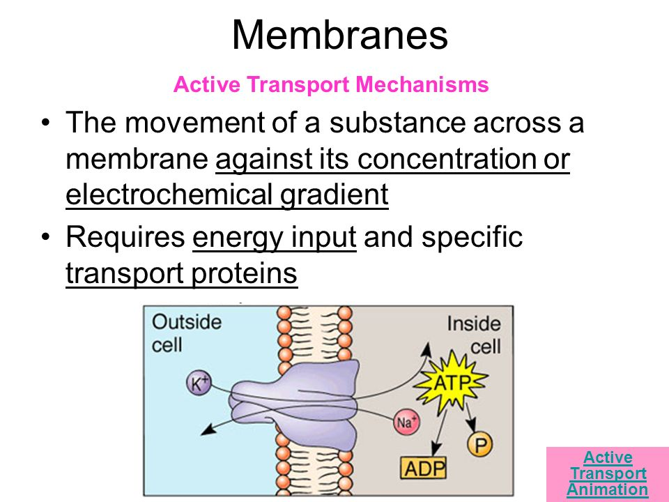 Cell Theory How do we know cells exist? - ppt video online ...