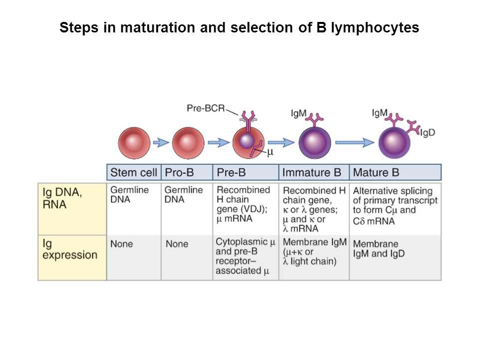 antigen recognition in the adaptive immune system