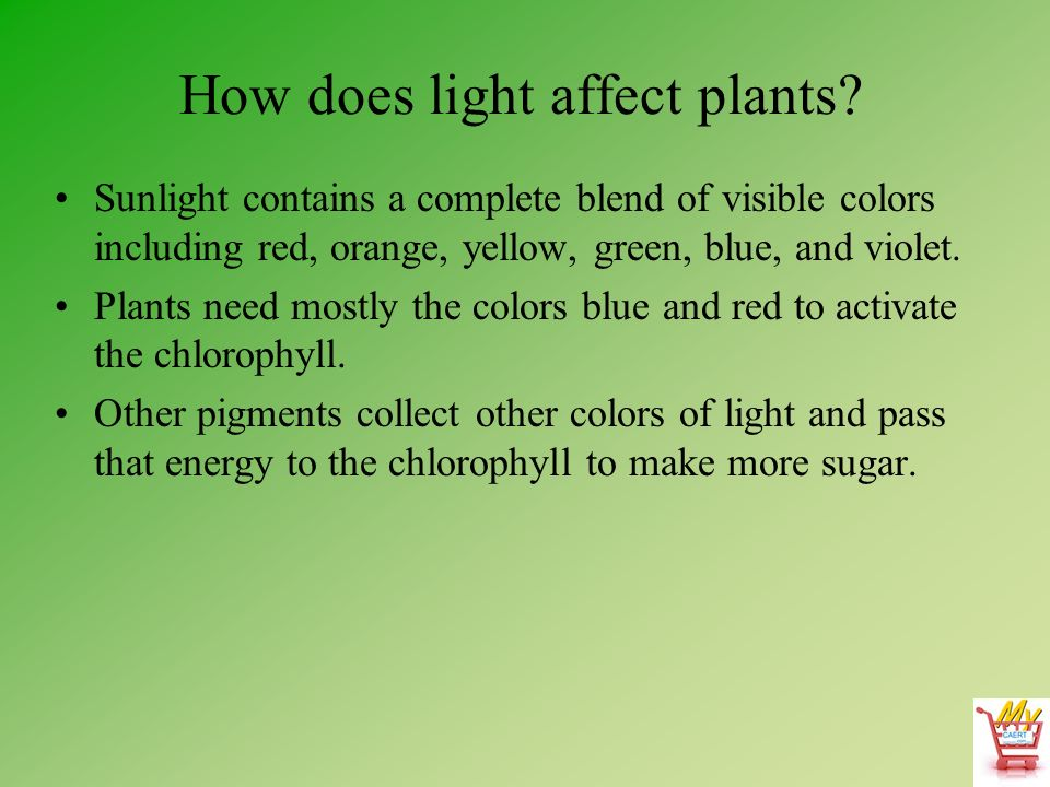 effects of colored light on plants Title: the effect of different colored light on plant growth author: quinn i strauser subject: cssf 2007 project summary keywords: cssf, california state science.
