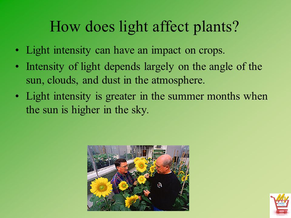 how does sunlight affect plants