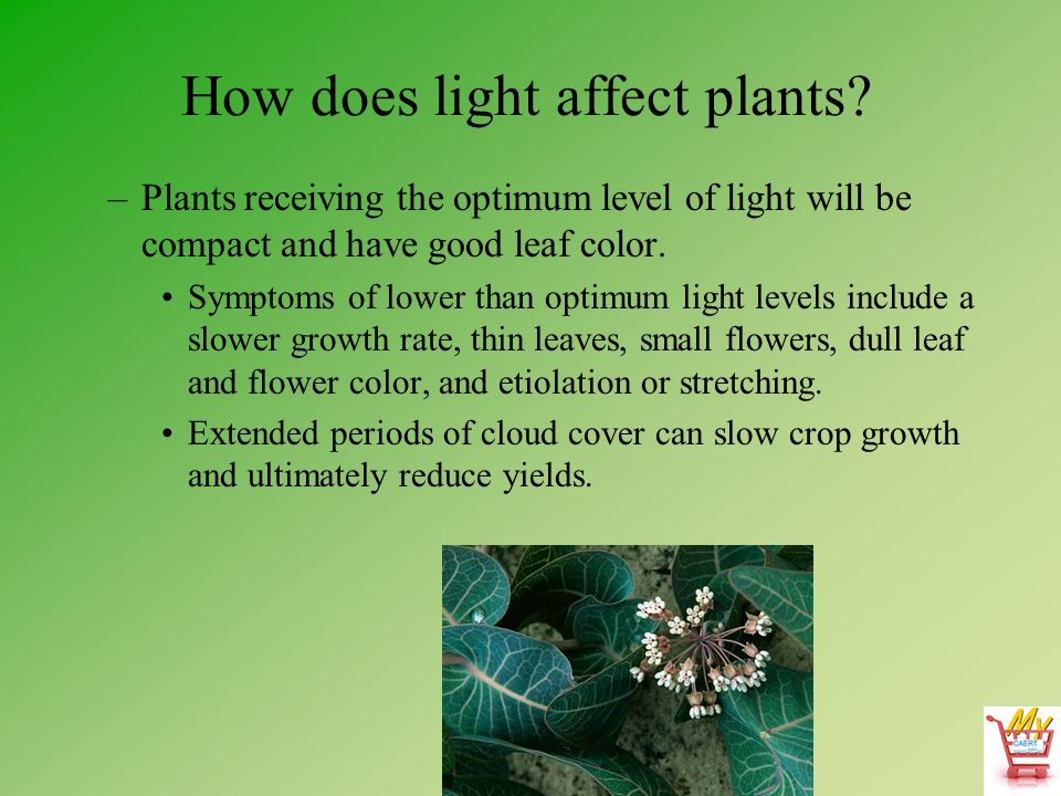 how do different colored lights affect plant growth The effects of colored light on plant growth  how does color of light affect plant growth  reference gives me an excellent source of background research,.