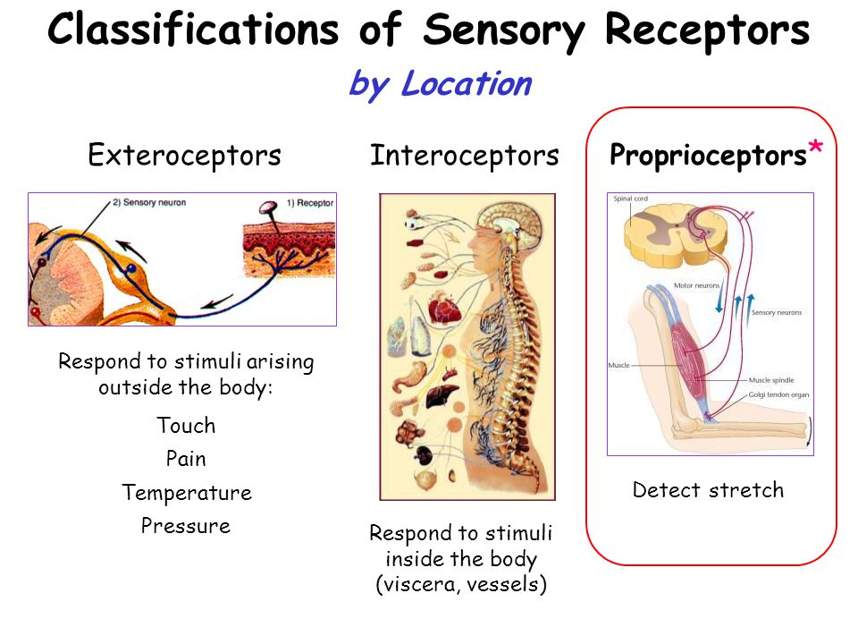 Sensory Deficit of Touch, Its Pain and Acupuncture Custom Essay
