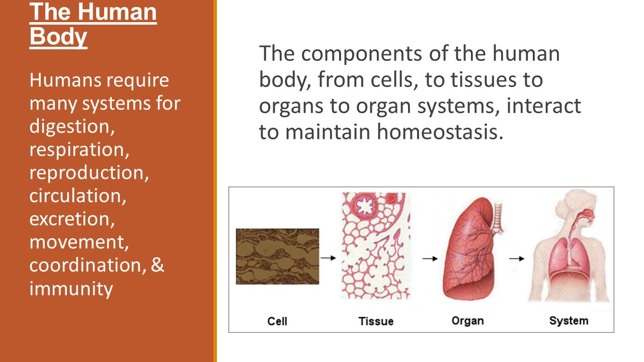 2 03 cell membranes and homeostasis essay Chybwctsafmfinalq 6/21/03 12:50 pm page 2 your body how it works cells, tissues, and skin the circulatory system human development the immune system the reproductive system the respiratory system.