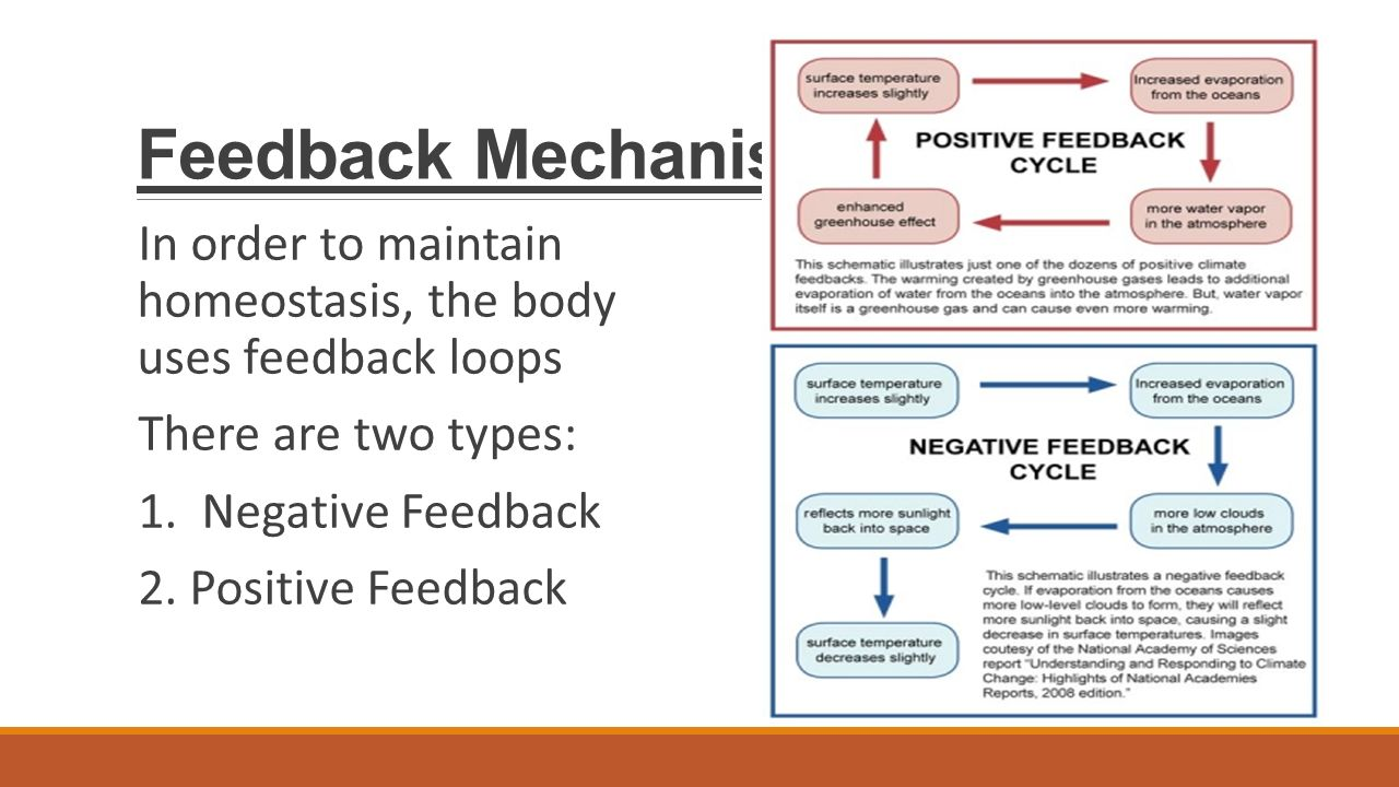 feedback mechanisms A feedback mechanism is a loop system wherein the system responds to a perturbation the response may be in the same direction (as in positive feedback) or in the opposite direction (as in negative feedback.