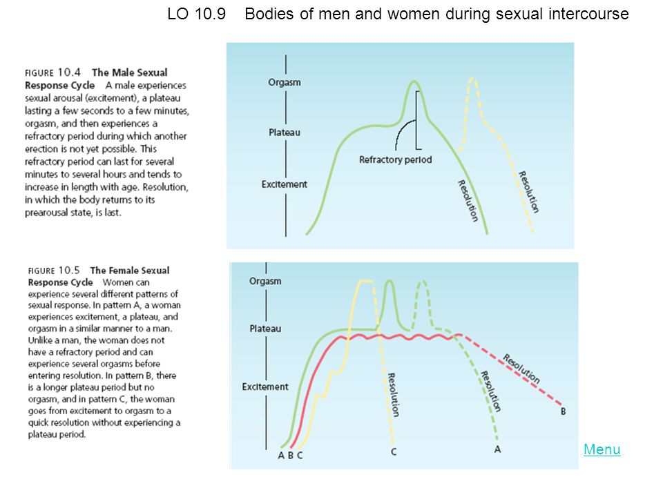 LO 10.9 Bodies of men and women during sexual intercourse