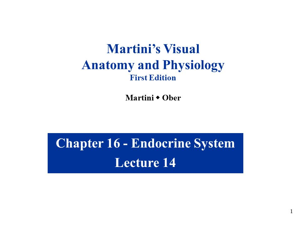 Anatomy and Physiology Chapter 16 - Endocrine System - ppt video ...