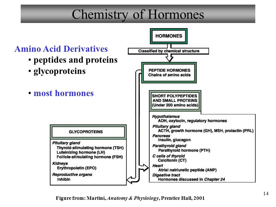 the right chemistry and my hormones There was no measurable change in sex hormones  the right chemistry: god, glycerine, flavouring and kosher coca-cola more columns by joe schwarcz.