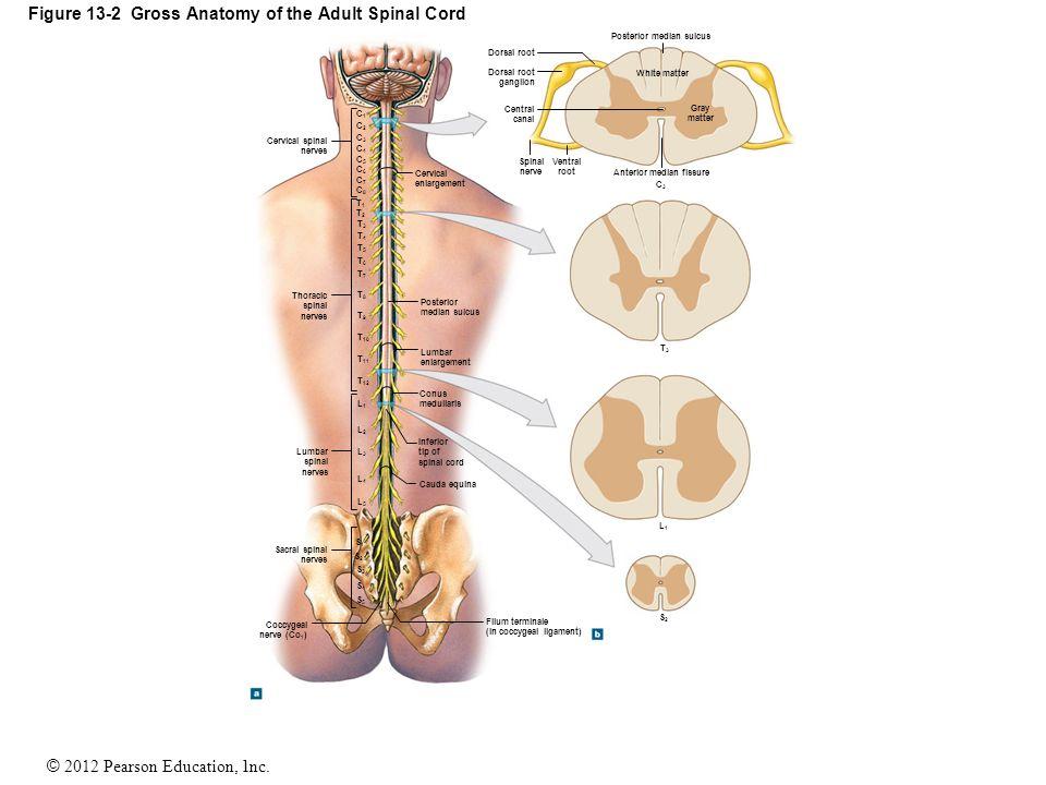 Spinal tap anatomy 9251003 - togelmaya.info