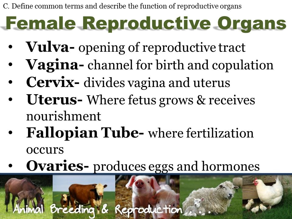 Animal Breeding & Reproduction - ppt video online download