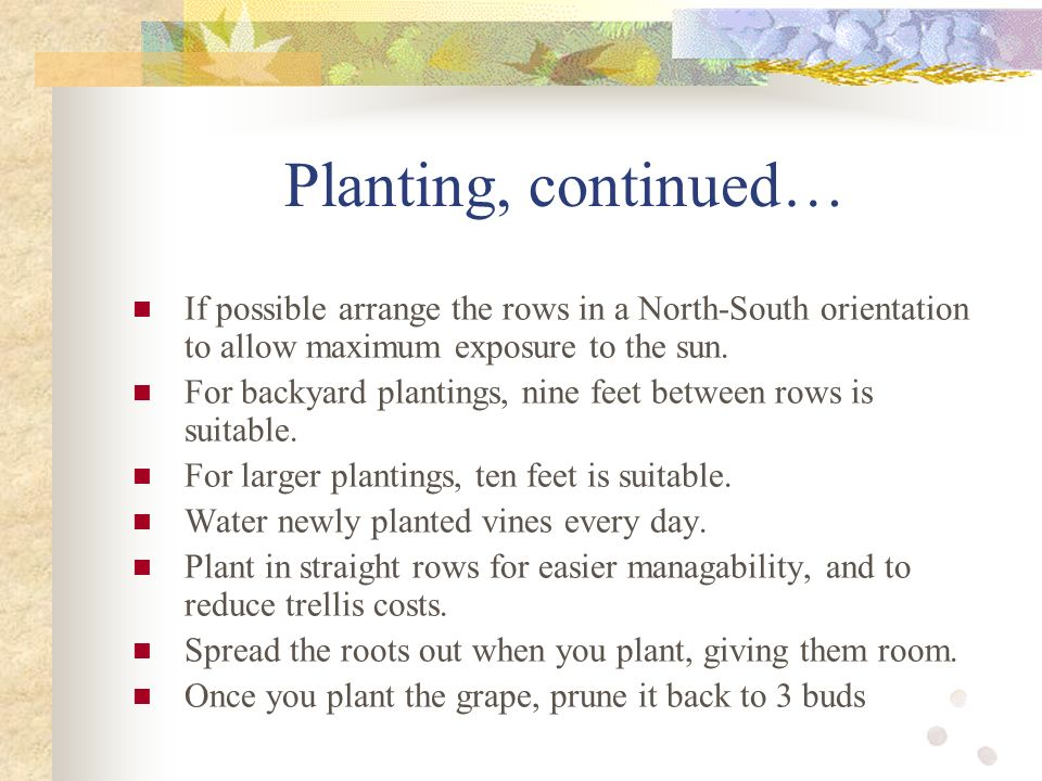 Growing grapes and their uses rachel peterson ppt download - Building orientation to optimize sun exposure ...