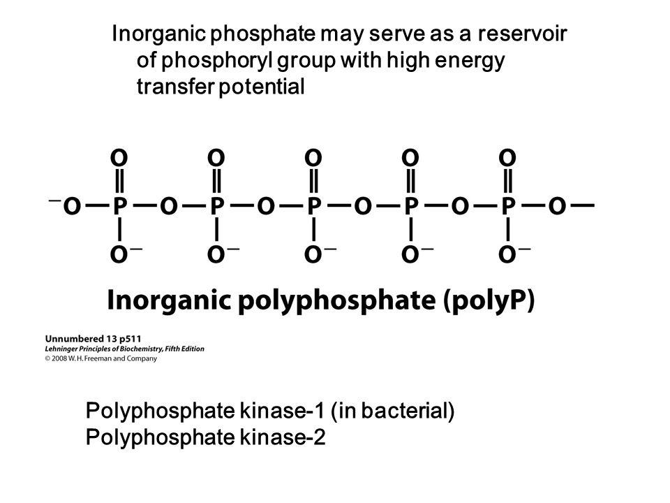 Inorganic Phosphate LEHNINGER PRINC...