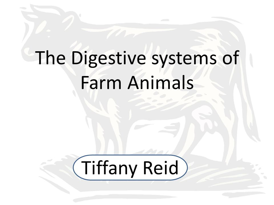The Digestive systems of Farm Animals - ppt video online download