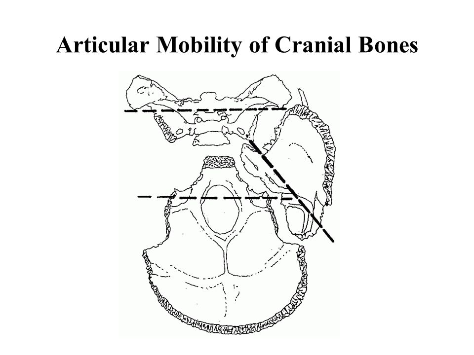 Articular Mobility of Cranial Bones