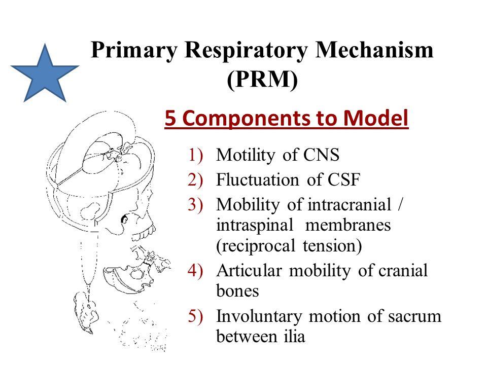 Primary Respiratory Mechanism (PRM)
