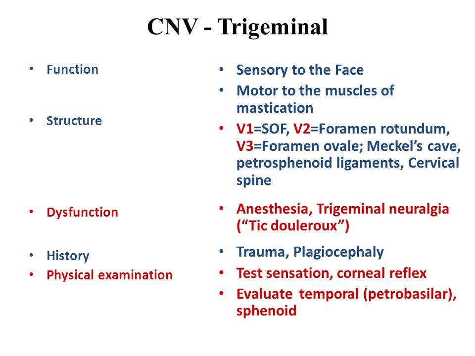 CNV - Trigeminal Sensory to the Face