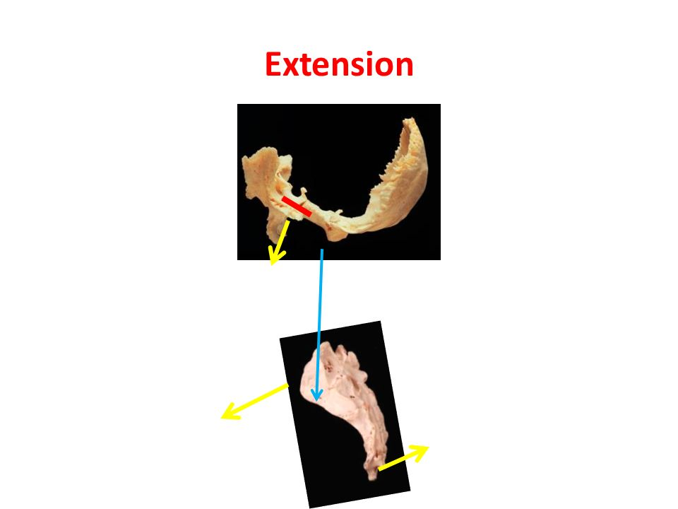 Extension Sacrum moves anterior = nutation