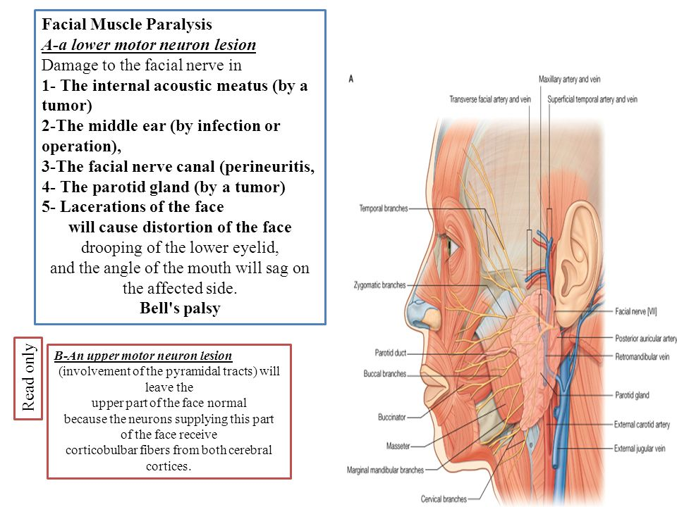 facial lesions and chin and cauliflower pattern and causes