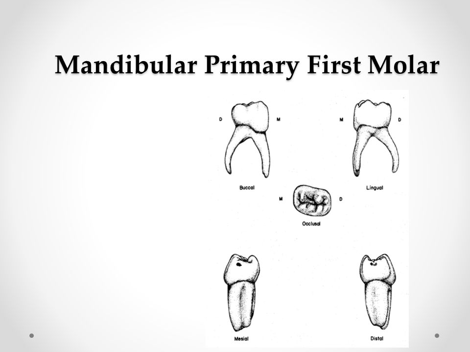 Primary Mandibular First Molar Anatomy