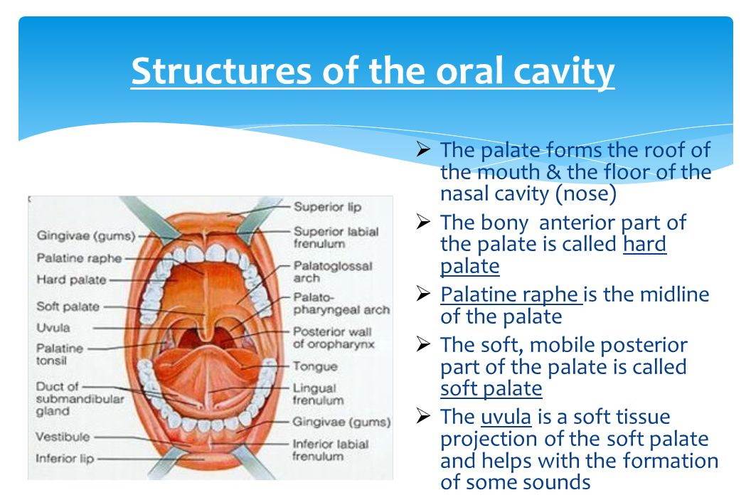 National diploma in dental nursing ppt video online download for Floor of nasal cavity