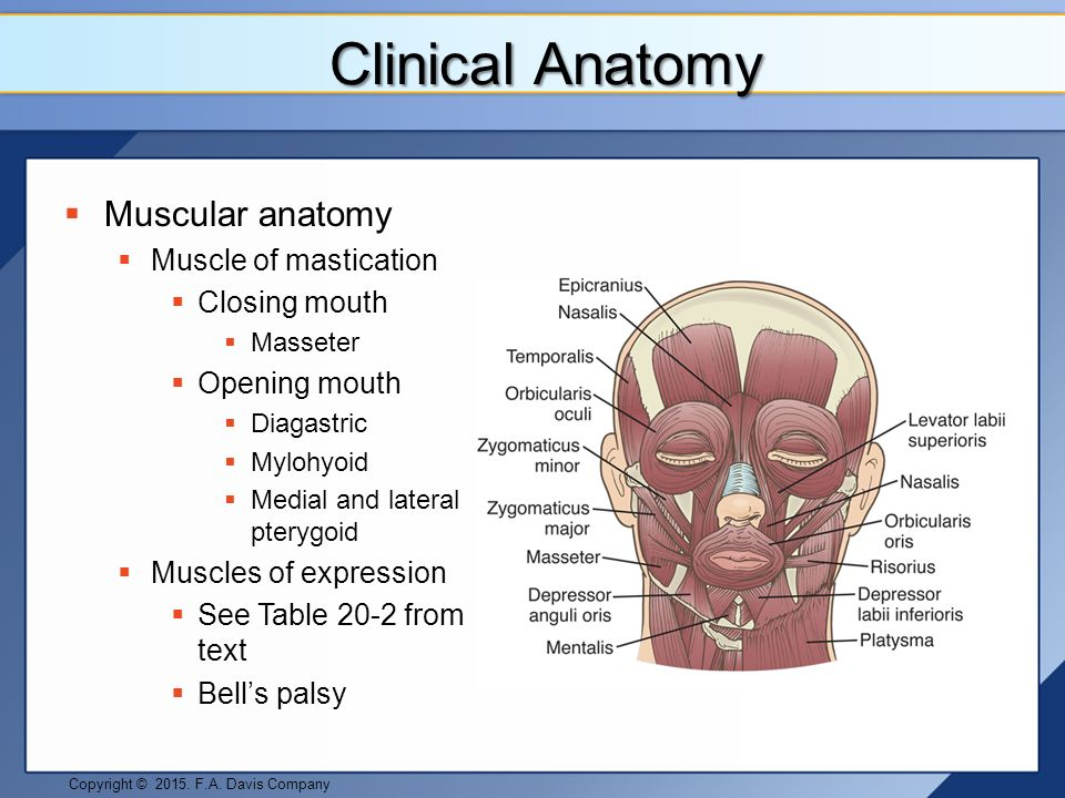 Clinical anatomy of facial muscles