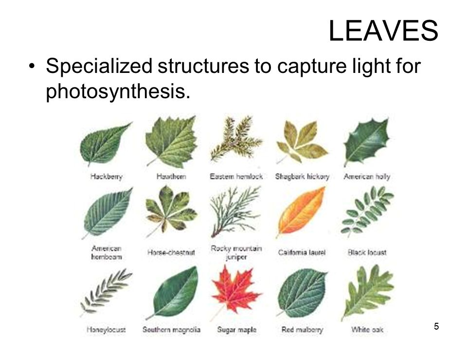 specialized leaf A-leaf offers highly skilled steel structure specialists to the wind industry we support your business with knowledge and expertise during the design process in qa and qc and in overall project management leaving you with a long-term profitable business.
