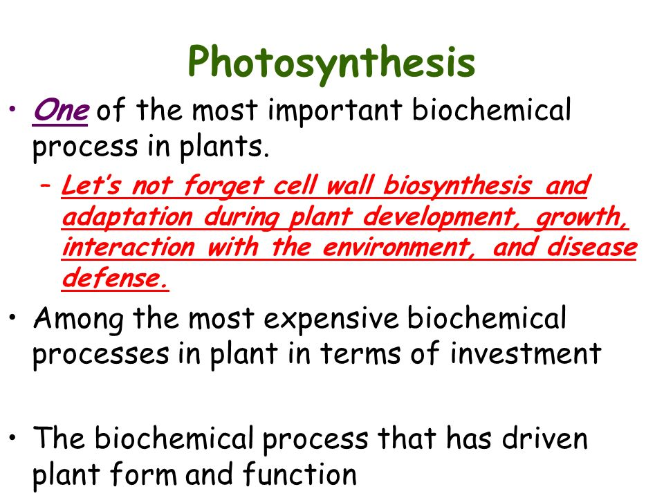 water in the biochemical process essay Biology essays - free download as describ e the biochemical o f how the anatomy of vascular plants and the properties of water contribute to t his process b.