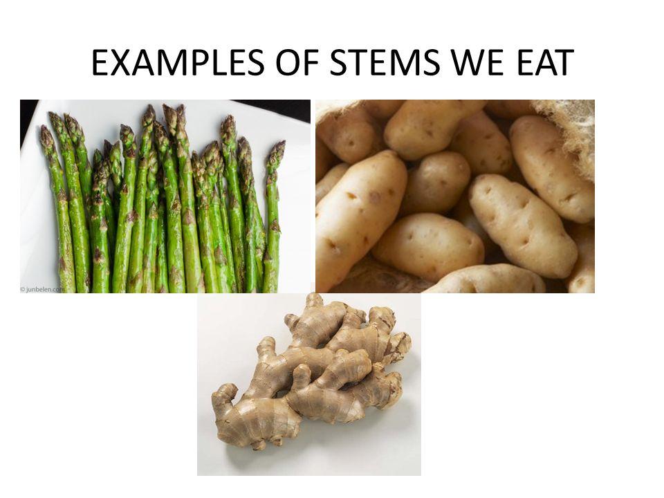 Eat Poop You Cat Examples
