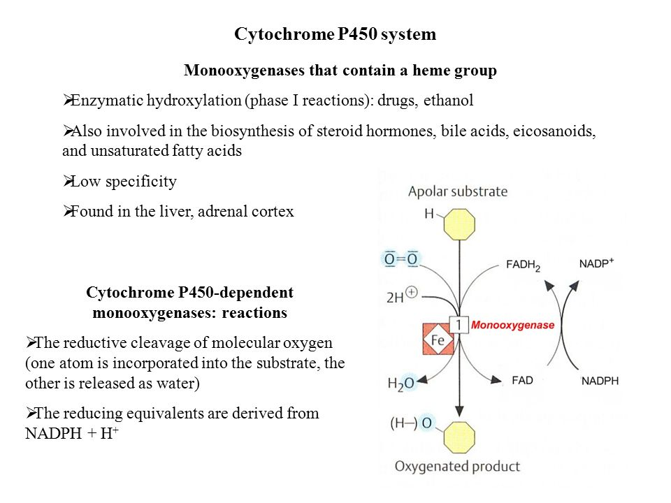 biosynthesis of steroid hormones pdf