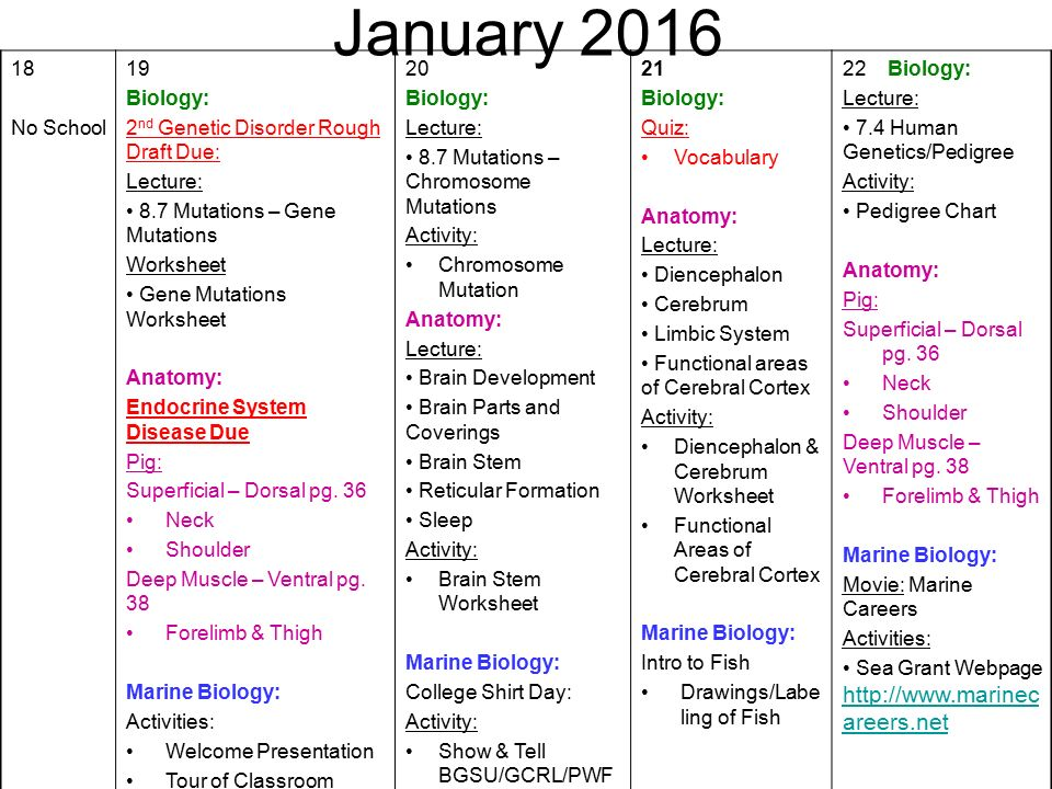 August First Day Of School Biology Activity Ppt Download