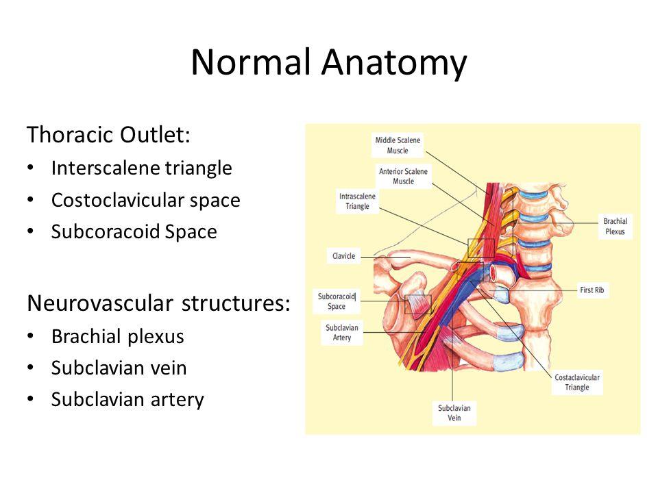 Triangular space anatomy