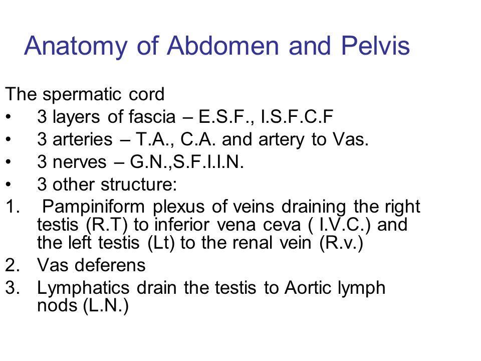 Anatomy of the abdomen and pelvis