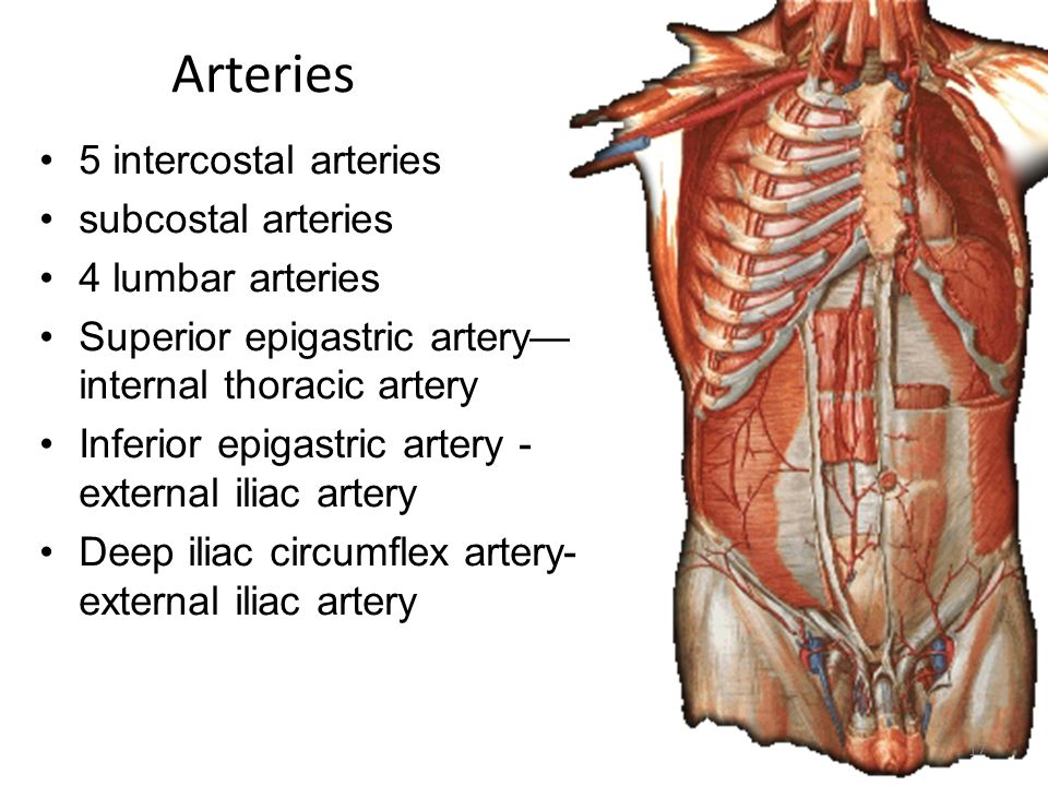 Anterior abdominal wall (IRS) - ppt video online download